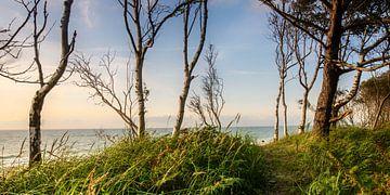 Blick zum Strand sur Steffen Gierok