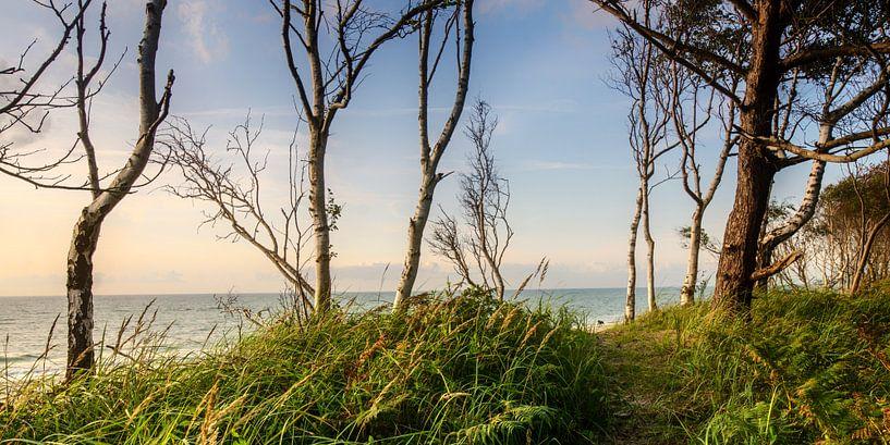 Blick zum Strand van Steffen Gierok