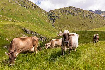 Koeien in de wei in Zwitserland van Werner Dieterich