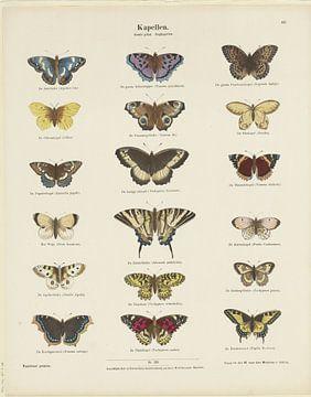 Schmetterlinge, Ernst Fröhlich von