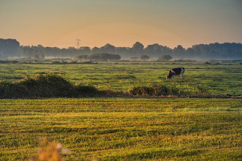 Koe in weiland van Jaap Mulder