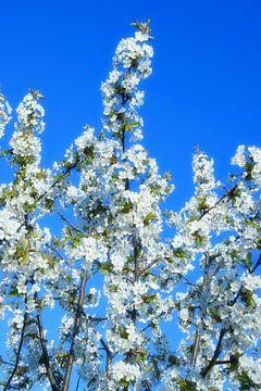 Baum mit weißen Blüten von Marcel Ethner