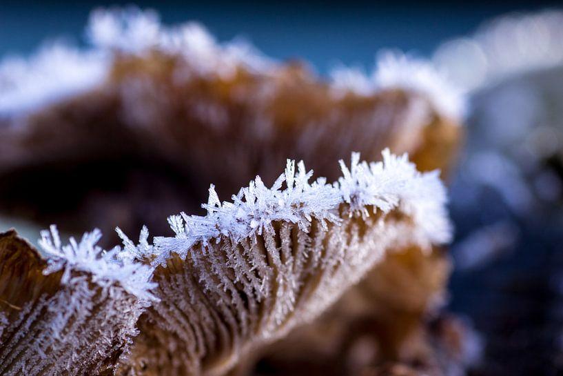 Bevroren paddenstoel  van Martzen Fotografie