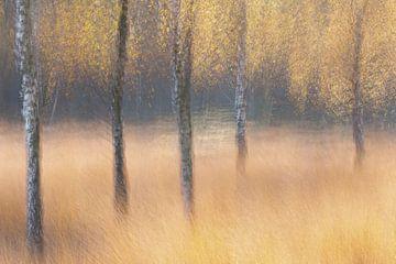 Birken im Herbst von Ria Bloemendaal