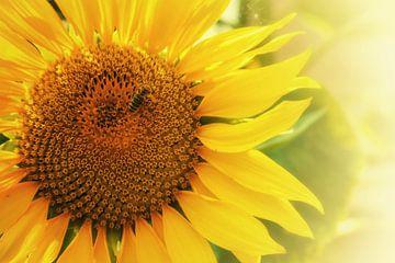 Sonnenblume mit Biene an einem schönen Sommertag von Bart Schmitz