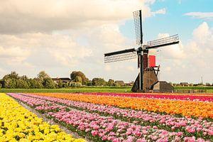 Een veld met bloeiende tulpen met op de achtergrond een molen en Hollandse wolken lucht