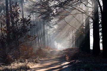 Winterlicht in de bossen op de Veluwe von Cilia Brandts