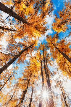 """Waldlandschaft """"Zusammenkunft"""" von"""
