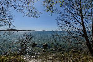 Am Ufer in der Goor, Insel Vilm, Lauterbach auf Rügen