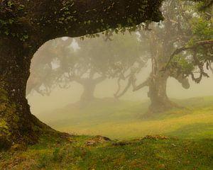 Der wunderschöne Laurisilva-Wald auf der Insel Madeira ist mit Nebel bedeckt.