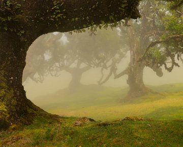 Het mooie Laurissilva bos op het Portugese eiland Madeira gehuld in mist. van Jos Pannekoek