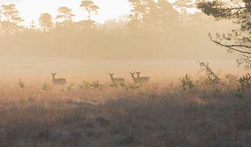 Hertjes in de ochtendzon van Ans Bastiaanssen
