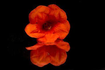 product fotografie  bloem in de spiegel van Diana Edwards