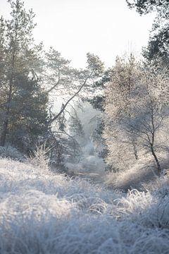 Winterse ochtend op de Veluwe van