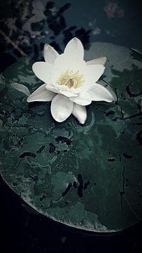 Lily von Mika'il Photography