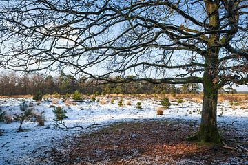 Landschap Strabrechtse Heide met sneeuw van Ger Beekes