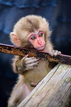 Affe in Japan von Alisa Visser