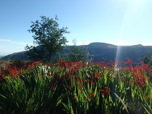 Landschap met rode bloemen en boom