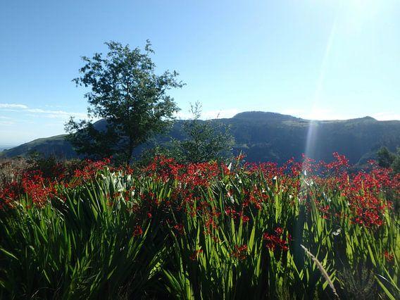Landschap met rode bloemen en boom van Robin van Tilborg