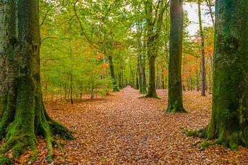 Herfst kleuren in bos bij Roosendaal van Jan Poppe