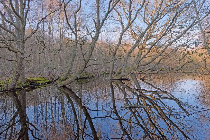 Den Helder, Donkere Duinen- spiegelende bomen van Ronald Smits