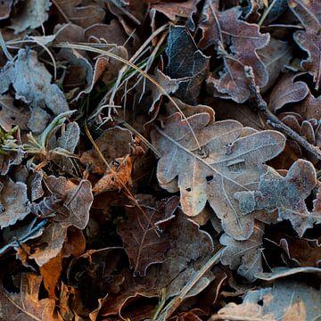 Warme herfst, koude winter