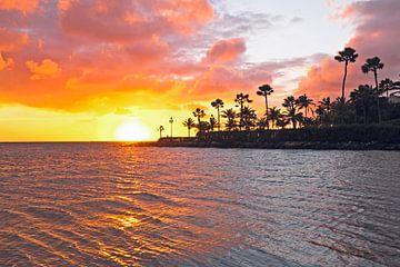 Tropische zonsondergang op Aruba in de caribbean von Nisangha Masselink