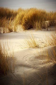 Sand dunes and grass in Schiermonnikoog von Luis Fernando Valdés Villarreal Boullosa