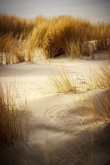 Sand dunes and grass in Schiermonnikoog van Luis Fernando Valdés Villarreal Boullosa