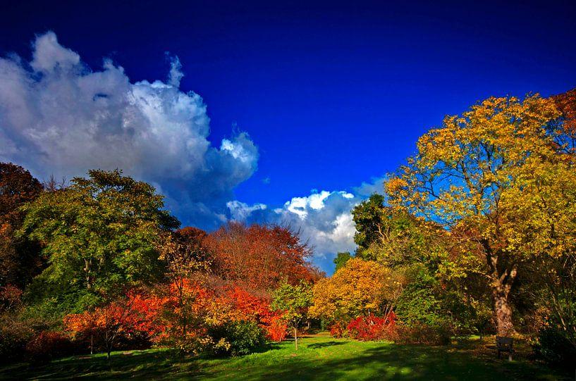 Herfstkleuren van Wouter Sikkema