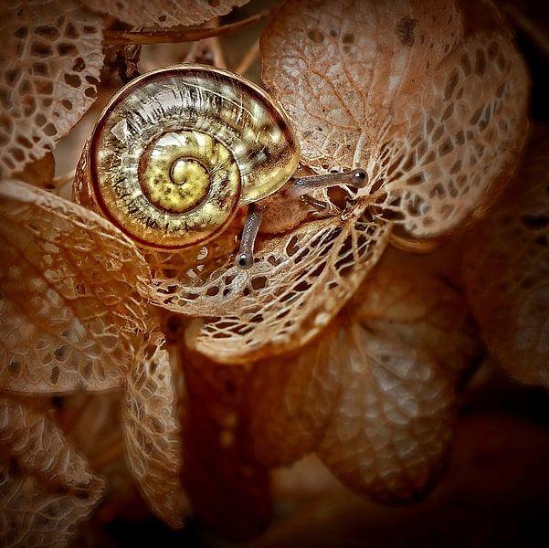 Schaduwballet, a ballet of grass van Marlies Prieckaerts