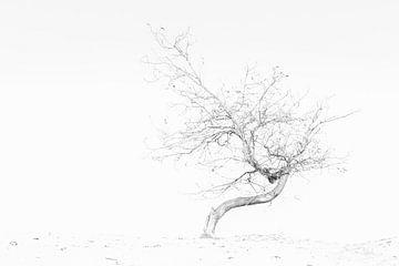 Herfst op het zand II van Marc Arts