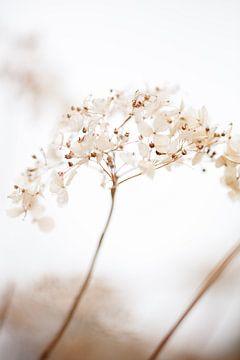 Zacht gedroogde bloem_brown, 1x Studio III van 1x