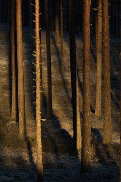 Eerste zonlicht van de dag straalt het bos binnen van Mindy Molein