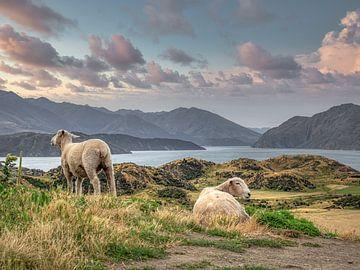 Neuseeland - Wanaka - Schafe zählen auf dem Berg von Rik Pijnenburg