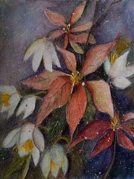 Weihnachtsstern mit Christrose von Christine Nöhmeier