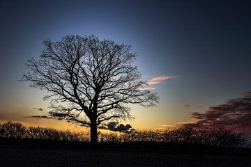 silhouet van een boom van Manuela Feuerhahn