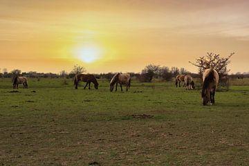 Wilde paarden tijdens de zonsondergang. van Rick van de Kraats