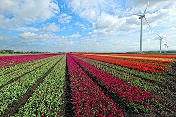 Hollands tulpenlandschap von Bob Bleeker