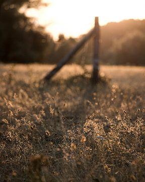 Zonsondergang in het veld van Christian van Lent