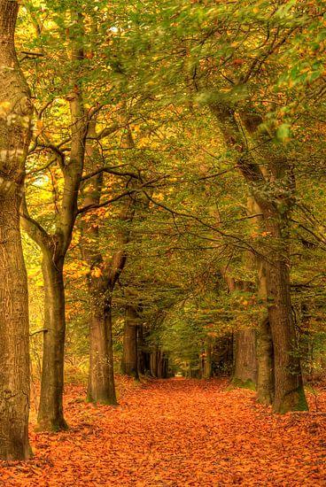 Herfst in bos van Sigrid Klop