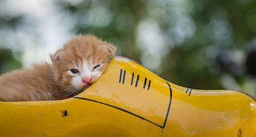 Kätzchen im Holzschuh von Jan Jongejan