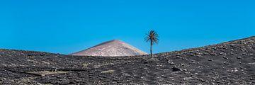 Paysage volcanique à Lanzarote, une des îles Canaries. sur Harrie Muis