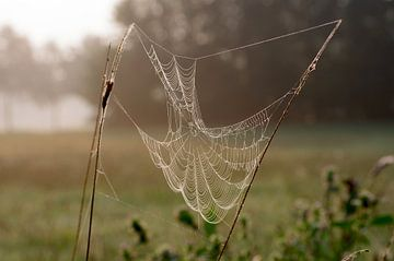 Spinnenweb op de weide van cuhle-fotos
