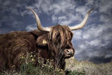 Une vache au soleil sur Carla van Zomeren
