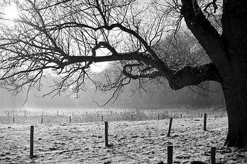 Baum auf der Vinkenbaan von Rob Donders Beeldende kunst