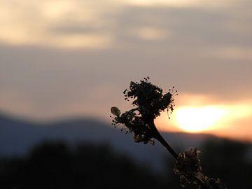Sunset Umbrie van