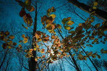 Golden leaves van Gina Peeters Fotografie