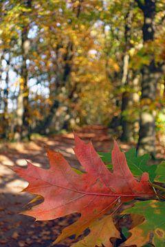 Herfst in de Kempen van