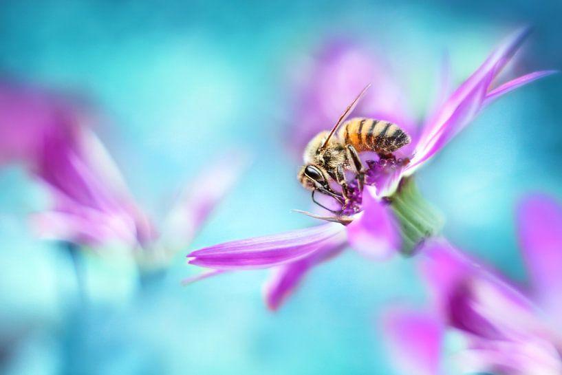 Honey bee  von Michelle Zwakhalen